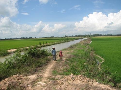 Nông dân phải thuê lại đất ruộng từ cty Đồng Tháp 1 để làm lúa