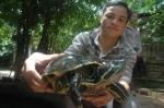 Mua rùa tai đỏ về nuôi đang là trào lưu của giới trẻ.