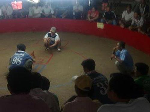 Các con bạc đang say máu đỏ đen tại trường gà của ông Út Phụng bên biên giới Campuchia. Ảnh: Hùng Dung