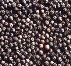 Giá hạt tiêu đen lên 120.000 đồng/kg