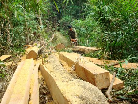 Trả lại đất cho rừng