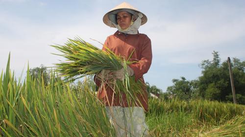 Thanh Hóa xin hỗ trợ gạo