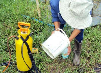 Có trên 6% mẫu rau quả kiểm tra nhiễm thuốc bảo vệ thực vật bị cấm sử dụng