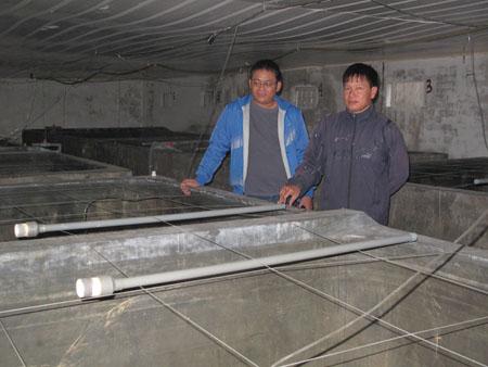 Anh Đinh Thanh Khiết (phải) với tác giả Sỹ Lực bên trang trại nhân giống ngao.