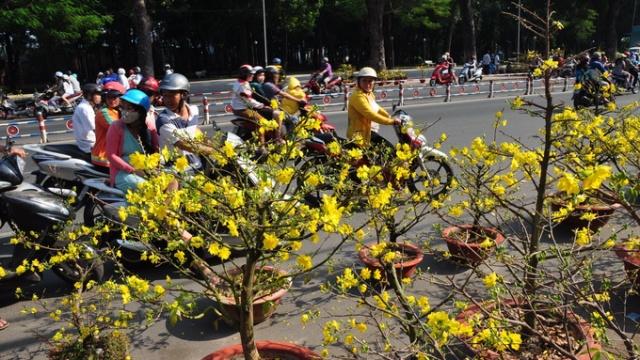 Hoa mai được bầy bán tràn lòng đường trước công viên Gia Định trưa 9-2