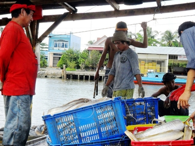 Một chuyến tàu đầy cá vừa cập bến. jpg