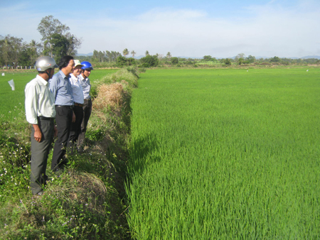 Đoàn công tác của Sở NNPTNT tỉnh Phú Yên kiểm tra tình hình phát triển lúa lai tại huyện Sông Hinh.