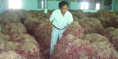 Hàng trăm tấn hành tồn kho chưa xuất qua Indonesia đang nằm tồn kho tại doanh nghiệp Đức Vinh
