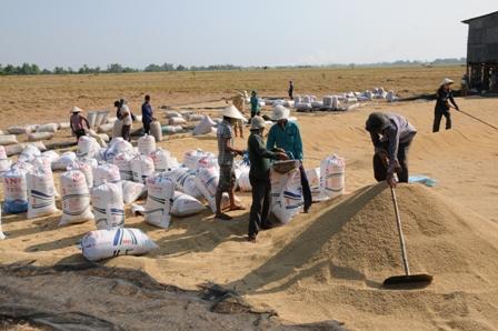 Nông dân trong tỉnh tham gia BHNN ngày càng tăng