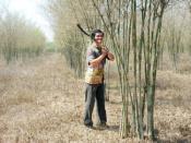 Anh Điểu Quốc ở ấp Tổng Cui Lớn đang chăm sóc vườn tầm vông hơn 2 ha của gia đình, được trồng vào năm 2008