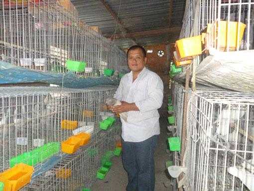 Hiện tại anh Dung đã là chủ một trang trại bồ câu lớn chuyên cung cấp cho các nhà hàng