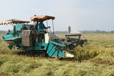 Thu hoạch lúa