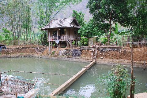 Ao nuôi cá rầm xanh