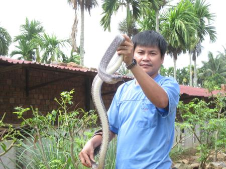 Anh Khánh giới thiệu con rắn hổ trâu nặng 2,5kg.