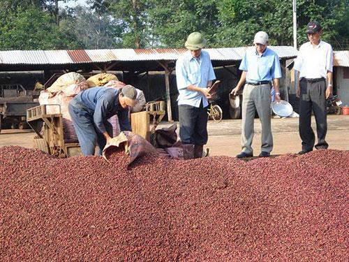 Doanh nghiệp lo lắng trước việc nhãn hiệu cà phê Buôn Ma Thuột bị các tổ chức, cá nhân ở nước ngoài đăng ký bảo hộ