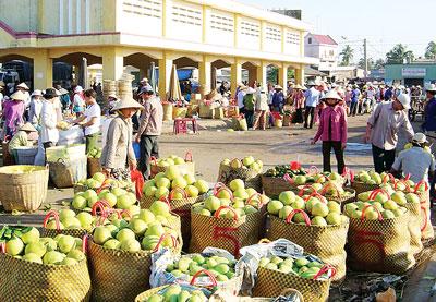 Hơn 97% sản lượng trái cây của nông dân tiêu thụ qua thương lái