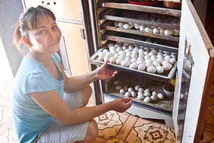 Vợ của ông Nguyễn Tấn Lộc bên chiếc máy ấp trứng đầu tiên do chồng tự chế tạo.