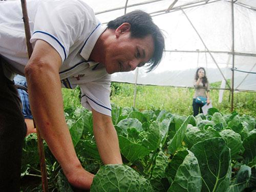 Anh Mai Văn Khẩn kiểm tra rau sú bao tử mới trồng thử nghiệm