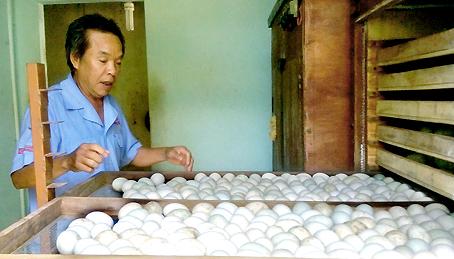 Ông Vũ Ngọc Quy bên lò ấp trứng vịt.