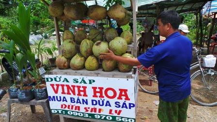 Anh Vinh Hoà vừa bán dừa trái và cả dừa sáp giống