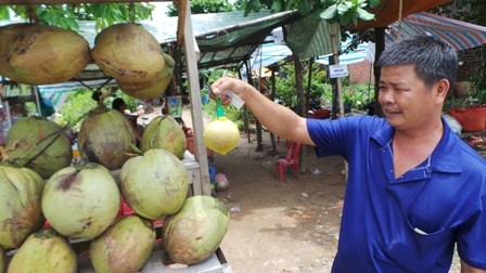 Mấy năm gần đây để tiện cho du khách anh Vinh Hoà lột hết phần vỏ và cho trái dừa vào túi cước bắt mắt như thế này