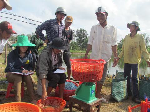 Nông dân đang vui vì tôm bán được giá