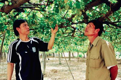 Vườn táo nhà anh Bùi Quân (thôn Trường Thọ).