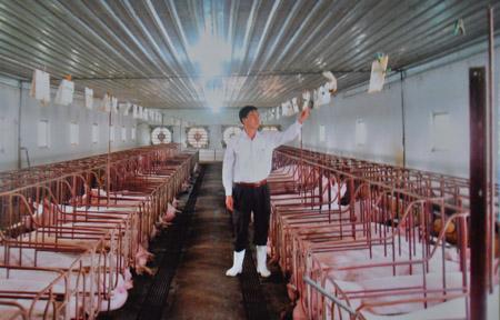 Ông Nguyễn Văn Thanh kiểm tra phiếu khám sức khỏe cho đàn lợn trong trang trại của HTX.