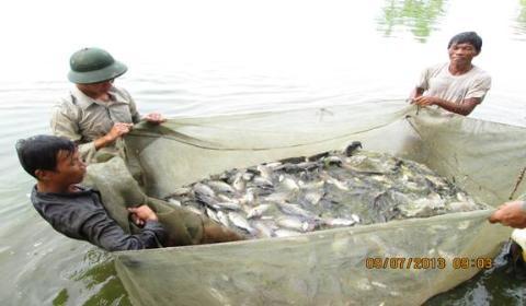 Kéo lưới cá