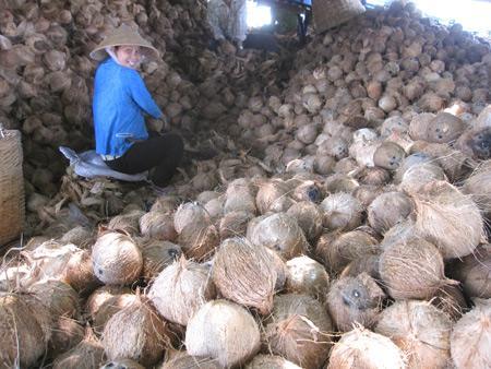 Vựa dừa khô