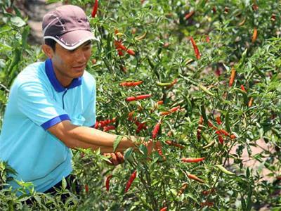 """Các tập đoàn thực phẩm hàng đầu Hàn Quốc đang """"săn"""" nguồn cung ứng nguyên liệu tại thị trường Việt Nam"""
