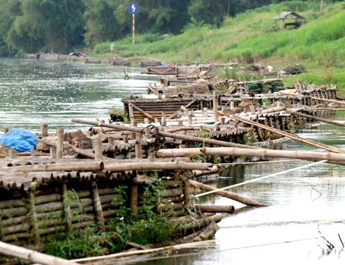 Lồng, bè nuôi cá chình nằm san sát ven sông Trà Khúc trải dài hơn 1km ở thôn Phước Lộc Tây, xã Tịnh Sơn, huyện Sơn Tịnh (Quảng Ngãi).