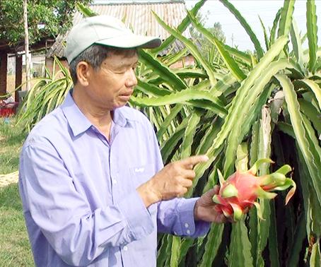 Ông Nguyễn Đức Tiến bên vườn thanh long
