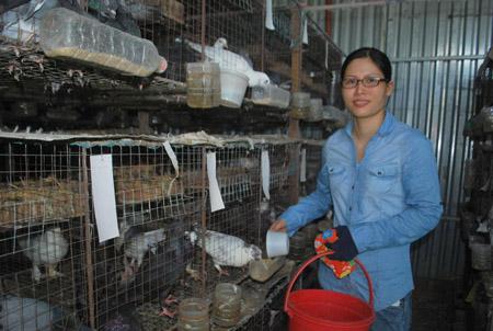 Chị Thùy Nhung chăm sóc bồ câu Pháp