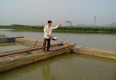 Hiện Nguyễn Minh Đăng có 10 lồng nuôi cá trên sông Bứa.