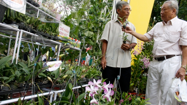 Hoa lan sản xuất theo phương pháp cấy mô trưng bày tại hội chợ triển lãm