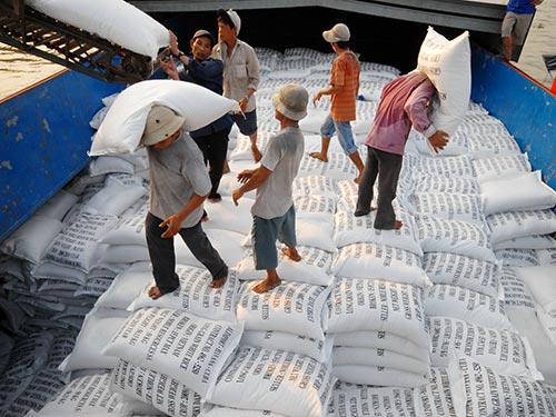 ĐBSCL vẫn chiếm lượng lớn trong tổng lượng gạo xuất khẩu của Việt Nam trong năm 2013