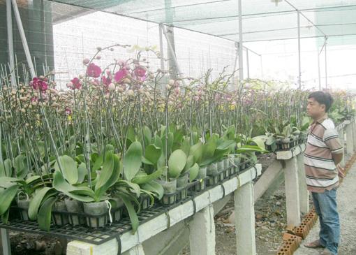 Nhiều cơ sở đã thu hút khách hàng đến mua hoa dù còn hơn 20 ngày nữa mới đến tết