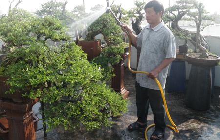 Ông Trần Thắng đang chăm sóc vườn bonsai trên sân thượng nhà mình.