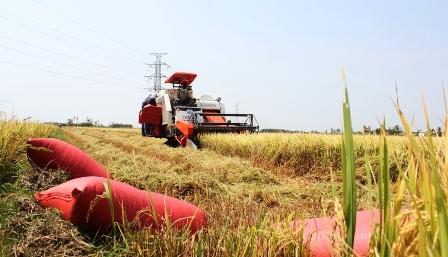 Thu hoạch bằng máy GĐLH dần thay thế thu hoạch thủ công ở vùng ĐBSCL