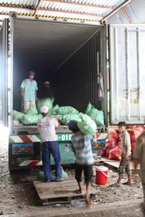 Chuyển khoai lang lên xe container để xuất khẩu sang Trung Quốc
