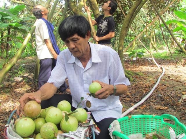 """Thị trường Trung Quốc vẫn """"ăn hàng"""" đều các loại trái cây VN"""