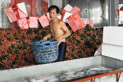 Vải Lục Ngạn cần có thêm những thị trường ngoài Trung Quốc để tránh phụ thuộc.