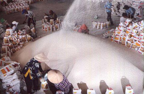 Xuất khẩu gạo Việt Nam sụt giảm mạnh sau 6 tháng đầu năm
