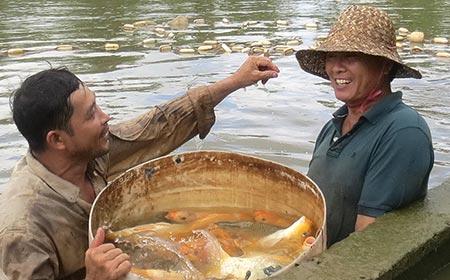 Ông Thập (phải) với những con cá chép giòn vàng ươm
