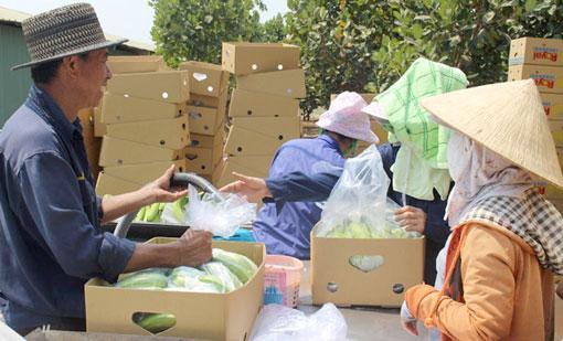 Chuyên gia nước ngoài (bên trái) hướng dẫn công nhân đóng gói chuối sau thu hoạch.