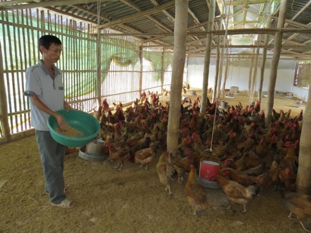 Lò ấp quy mô 2 vạn con gà giống/lần