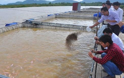 Nuôi cá lồng trên sông Bứa đang mang lại thu nhập cao cho người dân xã Quang Húc, huyện Tam Nông, Phú Thọ.