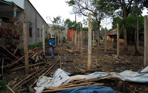 Trại nấm của bà Nguyễn Thị Mai (xã Sông Trầu, Trảng Bom) vừa tháo dỡ, đốt bỏ.