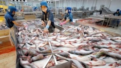 Chế biến cá tra xuất khẩu tại Việt Nam.